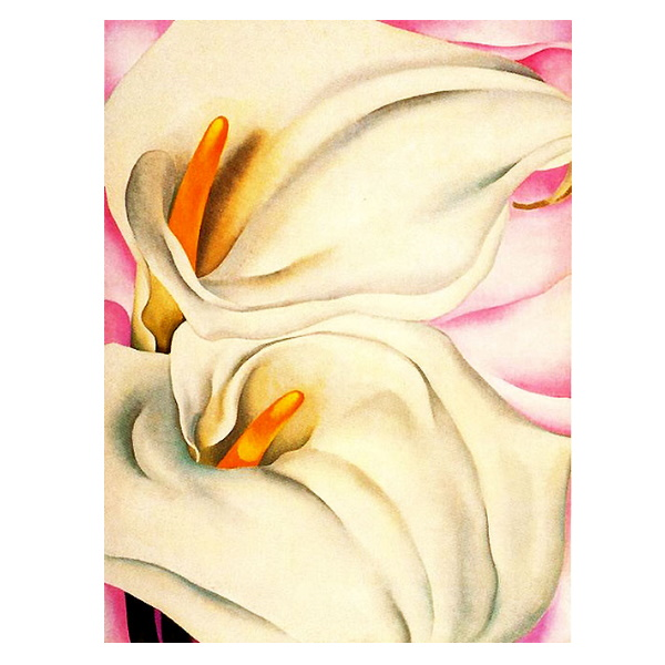 Two Calla Lillies